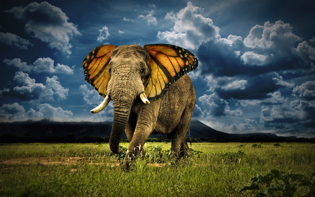 creative photo manipulation elephant with butterfly