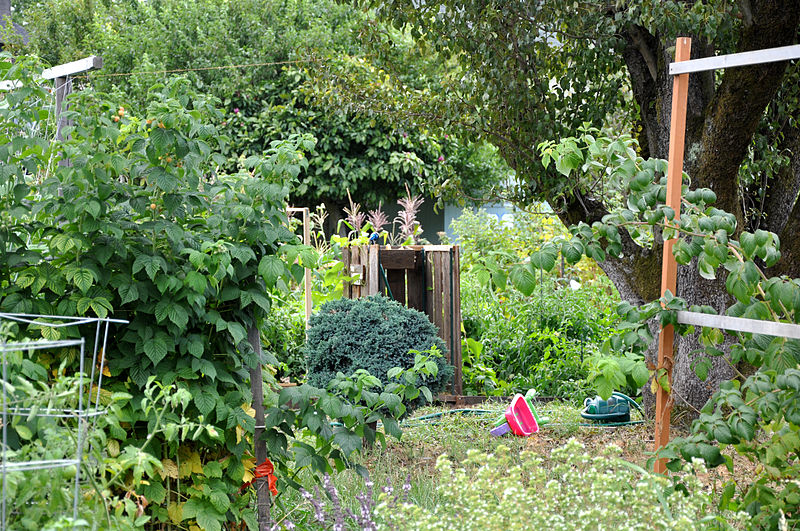 Bell and Star: I'm an allotmenteer!