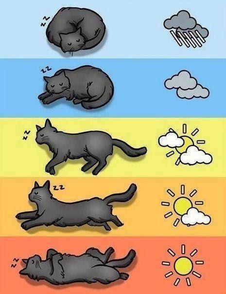 Meteorologia segundo o seu gato.