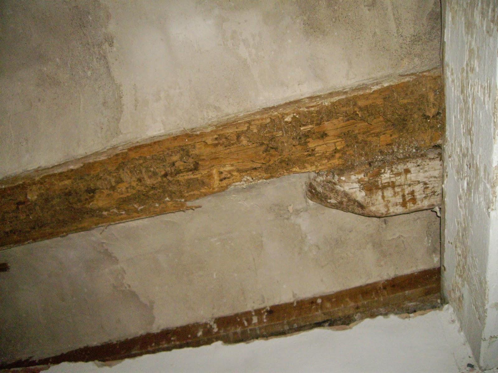 Arte de cuidar la madera la termita y su tratamiento - Tratamiento carcoma madera ...