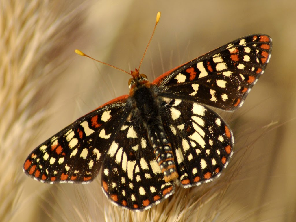 Funny image collection butterfly wallpaper for walls for Butterfly wallpaper for walls