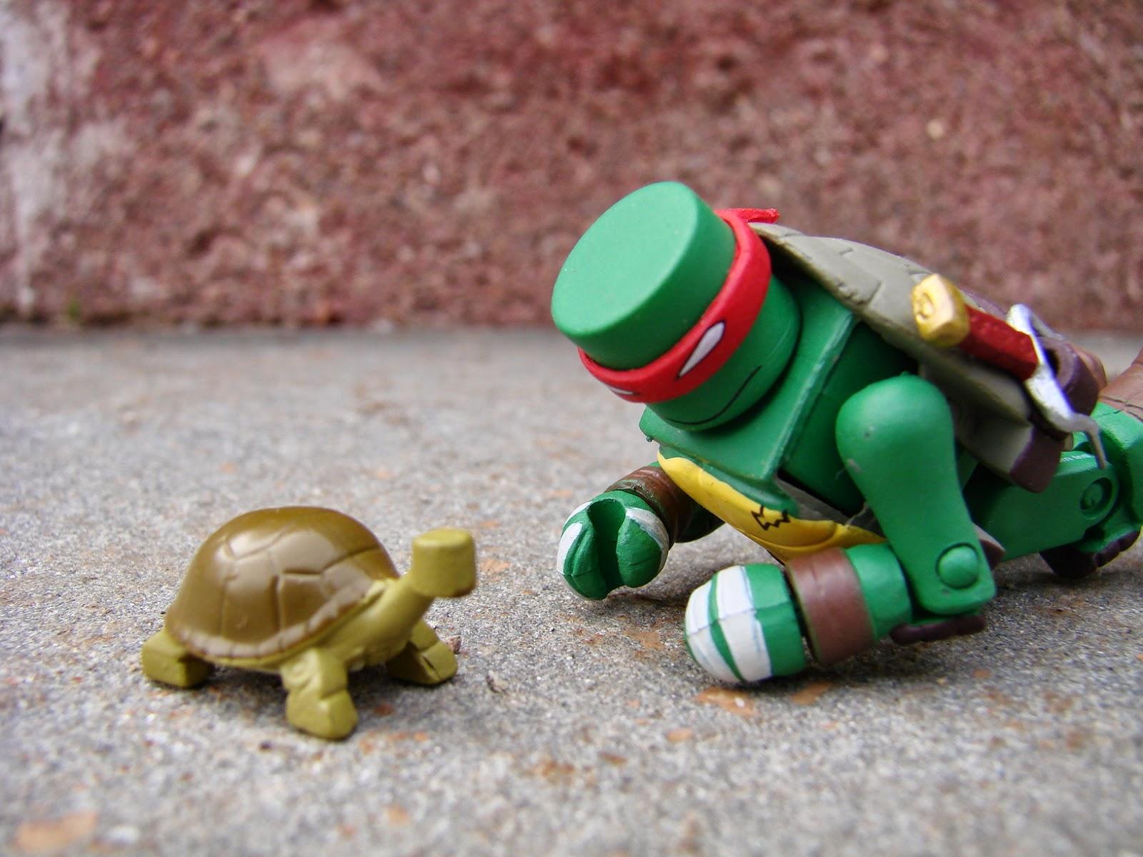 Warning turtles amp tortoises inc - Warning Turtles Amp Tortoises Inc 81