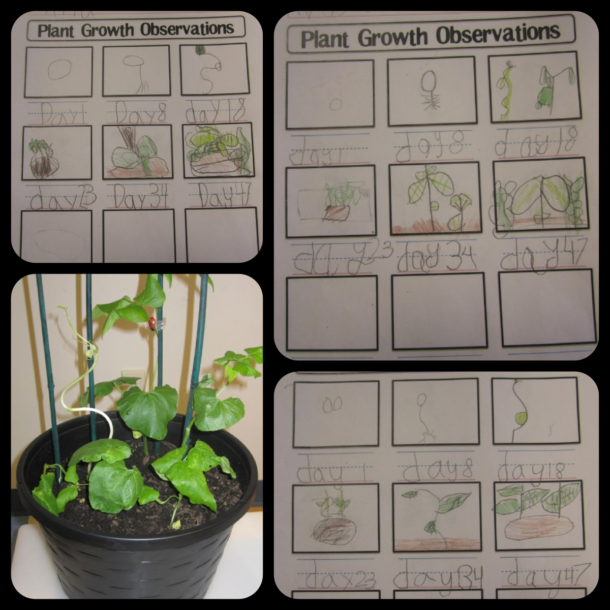 ellipsis required worksheet wednesday plant growth observations. Black Bedroom Furniture Sets. Home Design Ideas
