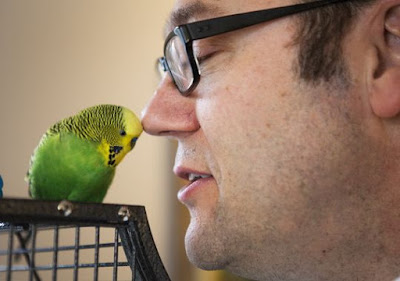 Tips How to Train Parakeet to Speak