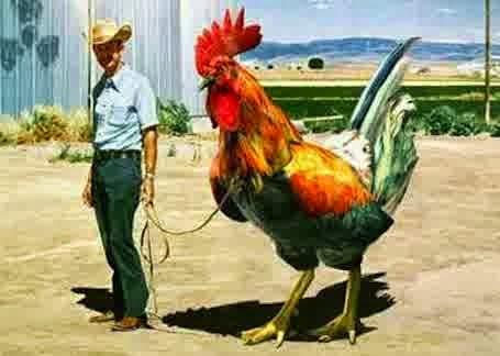 Contoh Proposal Bisnis Usaha Ternak Ayam Kampung