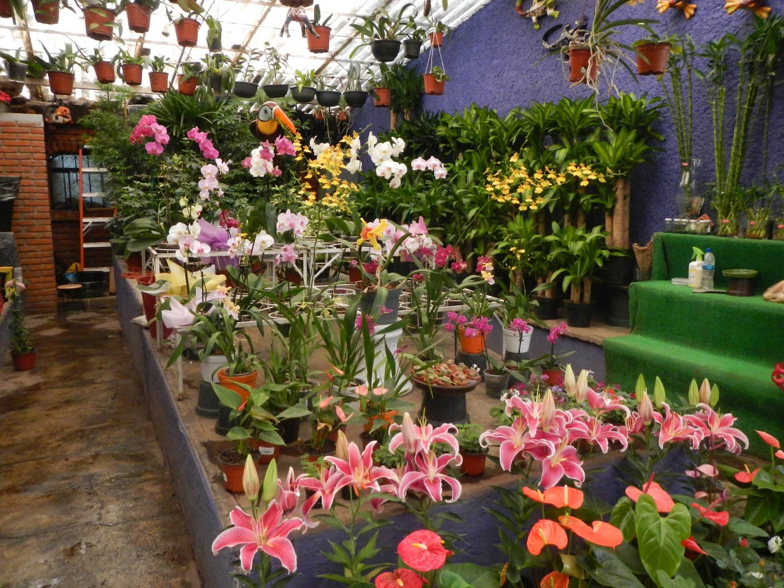 Mercado de plantas viveros de coyoac n for Viveros de plantas