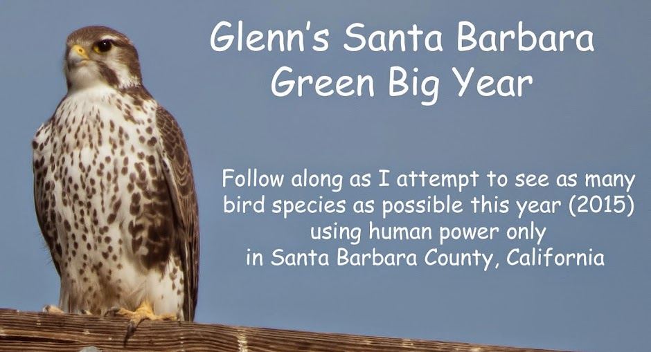 Glenn's Santa Barbara Green Big Year