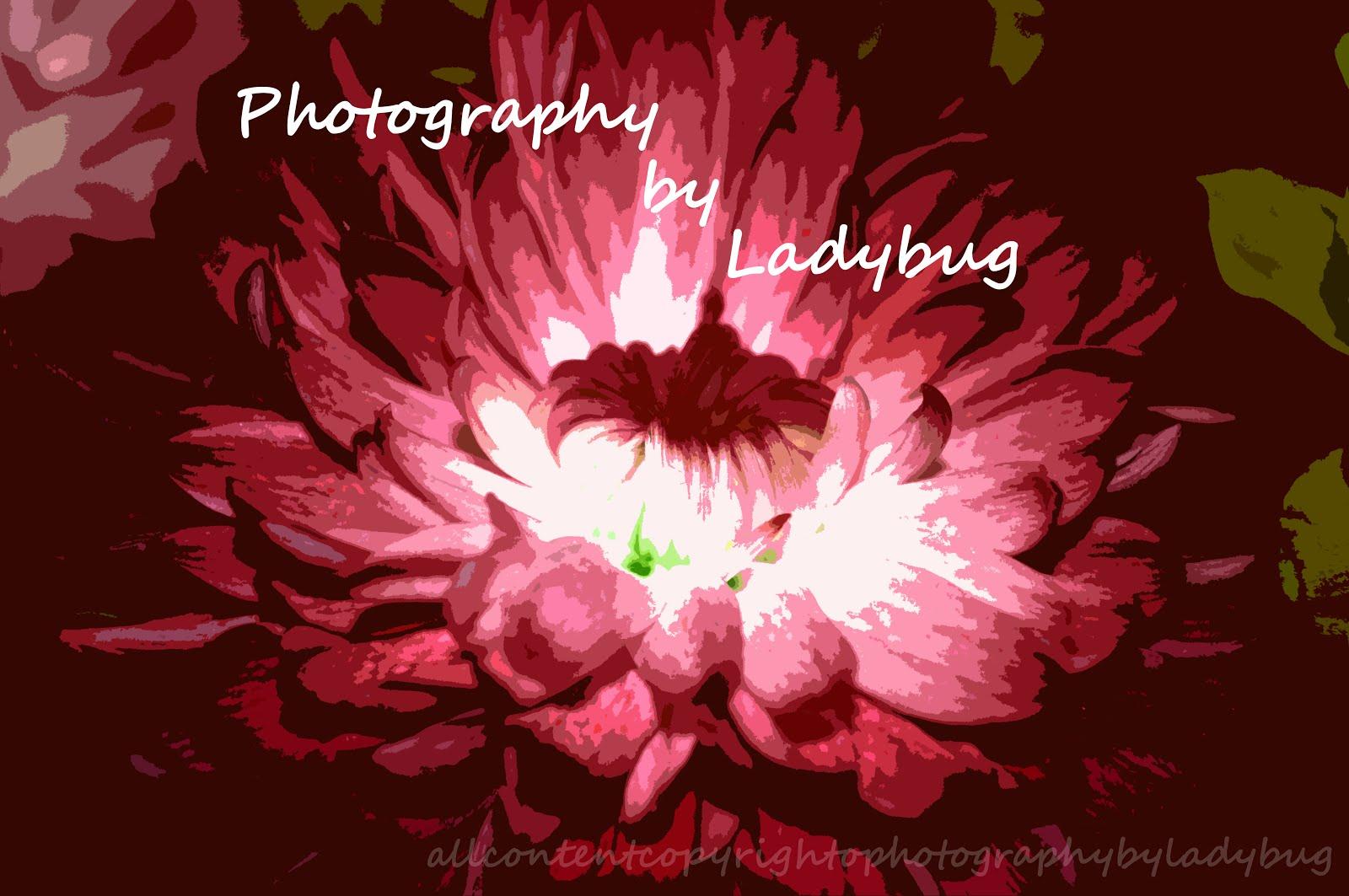 Photography by Ladybug