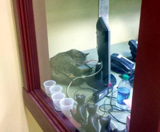 foto kucing kantor 04