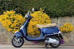My Vespa - Posts