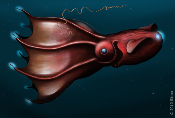 Interesting Animals  Vampire Squid from HellVampire Squid From Hell