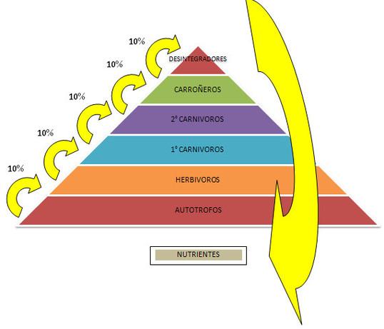 LEY DEL DIEZMO ECOLÓGICO | Químicas-Biológicas