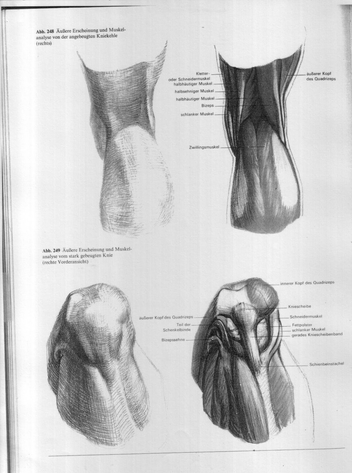 Fantastisch Menschliche Anatomie Rechte Seite Galerie - Anatomie Von ...