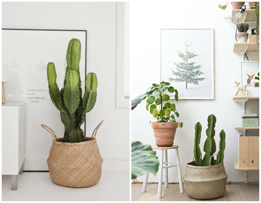 Decoraci n f cil 10 mejores plantas de interior - Plantas de interior sin luz ...