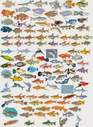 Set de vectores de gran variedad de peces gratis cute e for Variedad de peces