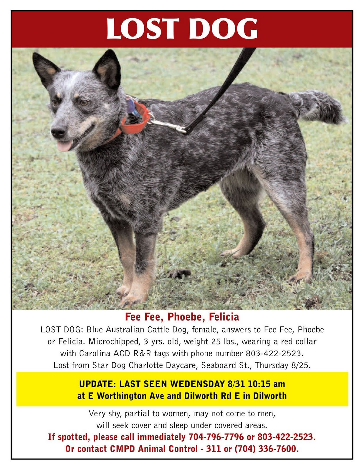 Craigslist Charlotte Pets >> Lost Dogs Found Lexie Cattle Dog