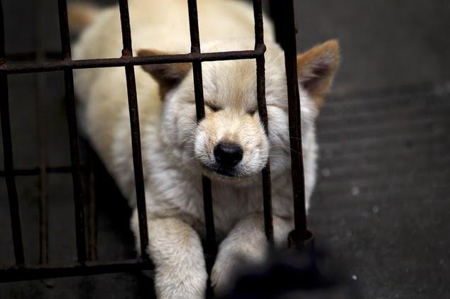 Perros sacrificados en China para comer