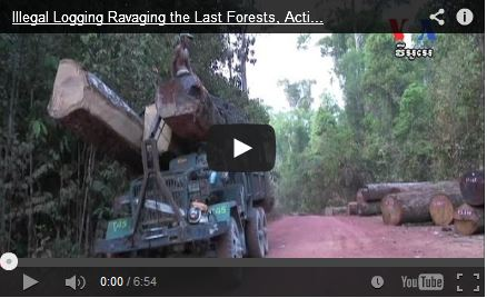 http://kimedia.blogspot.com/2014/10/illegal-logging-ravaging-last-forests.html