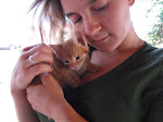 Caring for Orphaned Kitten, Midas