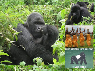 5 days Rwanda luxury gorilla tour golden monkeys visoke,  budget tour rwanda,  visoke hike, golden monkeys rwanda,primates tour rwanda cheap Gorilla trek Rwanda,mid-price Rwanda gorilla tour,rwanda gorilla golden monkeys visoke treks, 5 days gorilla tour rwanda, luxury safari rwanda, gorilla safari, Rwanda, rwanda tour operator, rwanda tour company, gorilla tour agent, gorilla,