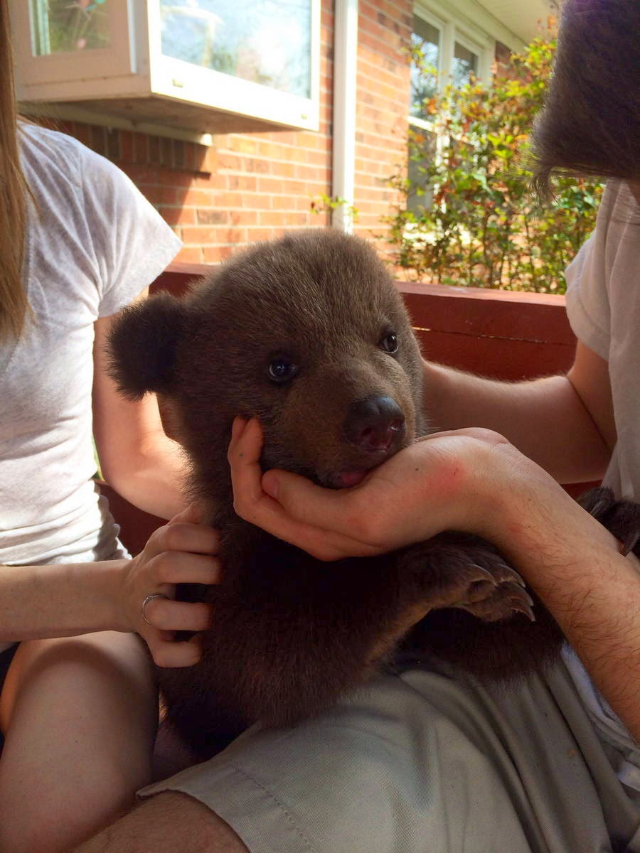 Funny animals of the week - 28 March 2014 (40 pics), cute baby bear