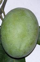 mangga lalijiwa