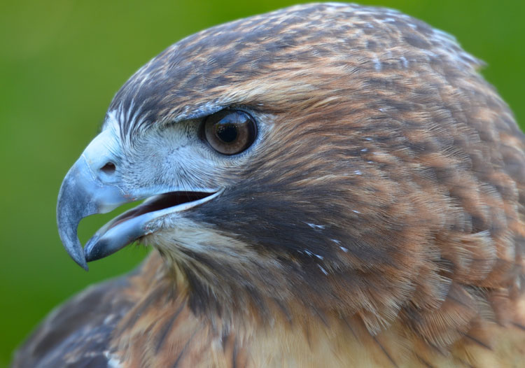 an analysis of raptor red A washington an analysis of the topic of morality post-kaiser poll released in june 2015 found that 1 in 5 an analysis of raptor red women an analysis of alcohol in college campuses an.