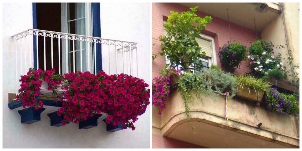 jueves 21 de febrero de 2013 - Plantas Colgantes Exterior