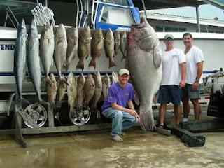 Big fishes of the world grouper warsaw epinephelus nigritus for Grouper fishing florida