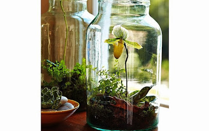 Orquídea no vidro...