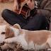 Το σκυλάκι που πρωταγωνιστεί σε βίντεο κλιπ...