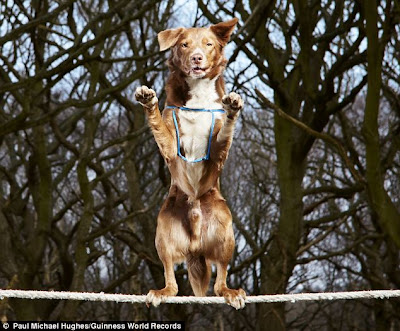 Amazing Balancing Act of the Dog on a Tightrope