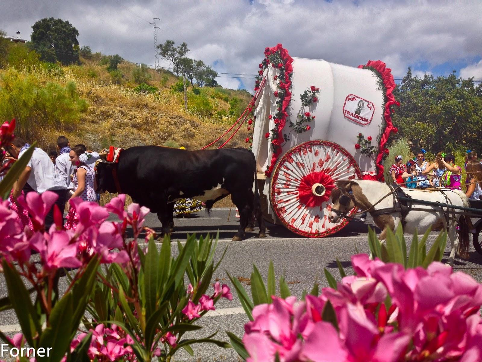 Fotos cabalgata feria de las flores 2012