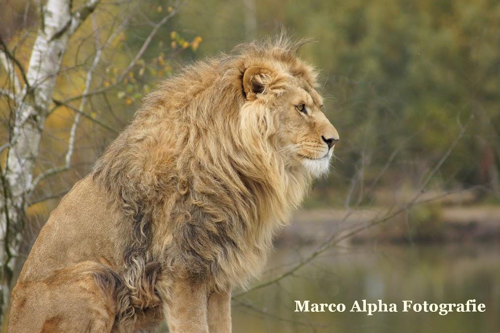 Marco Alpha Fotografie