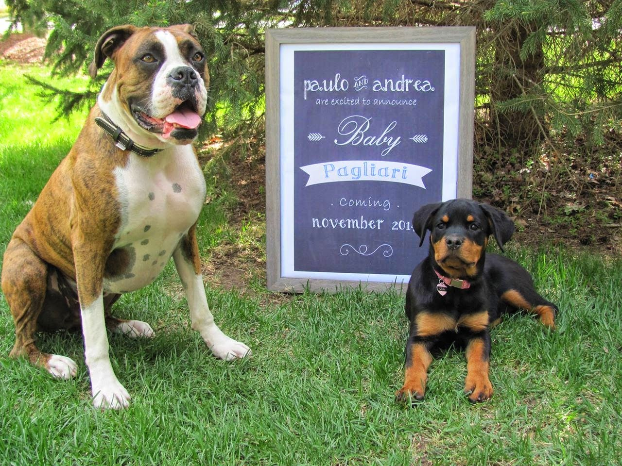 I Heart Pears Pregnancy Announcement Ideas – Birth Announcement with Dog