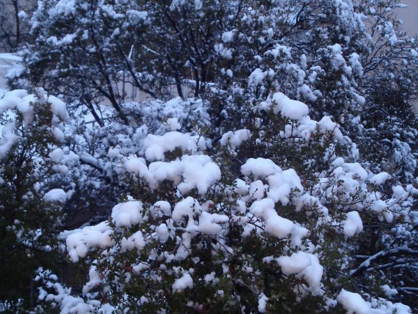 χιόνια 2016