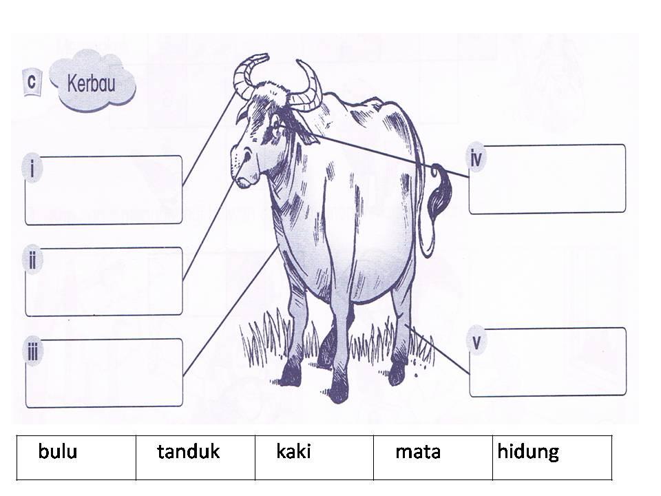 Latihan 2 Warnakan Bunyi Haiwan Haiwan Berikut