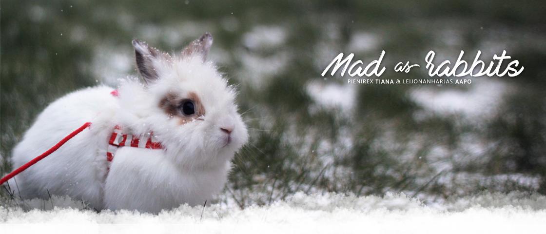 Mad As Rabbits