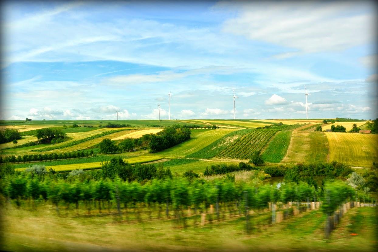 Austrian field; Vienna blog