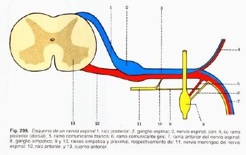 Fisiatría al Día: Electrodiagnóstico de la radiculopatía lumbar