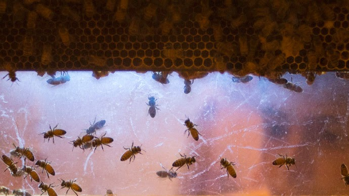 800,000 bees kill Arizona gardener