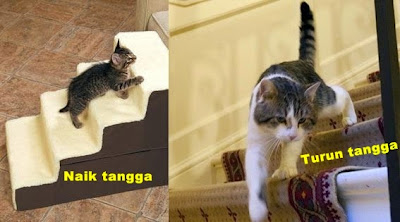 Menguak Teka-teki Ilusi Foto Kucing di Tangga