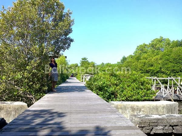 Mangrove Forest Conservation Bali