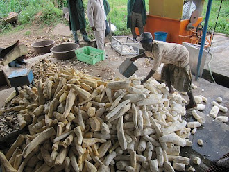 The Cassava process