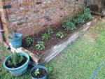 Garden: Day 27