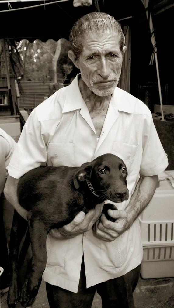 Fotografías de perros callejeros de Traer Scott