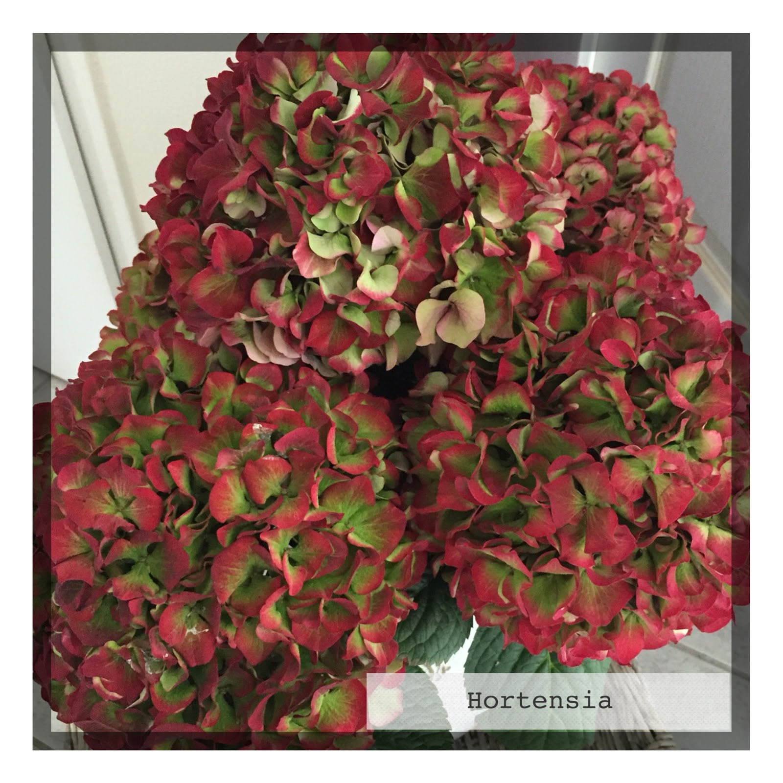 C t mag le blog bouquets d 39 eucalyptus et d for Commander un bouquet