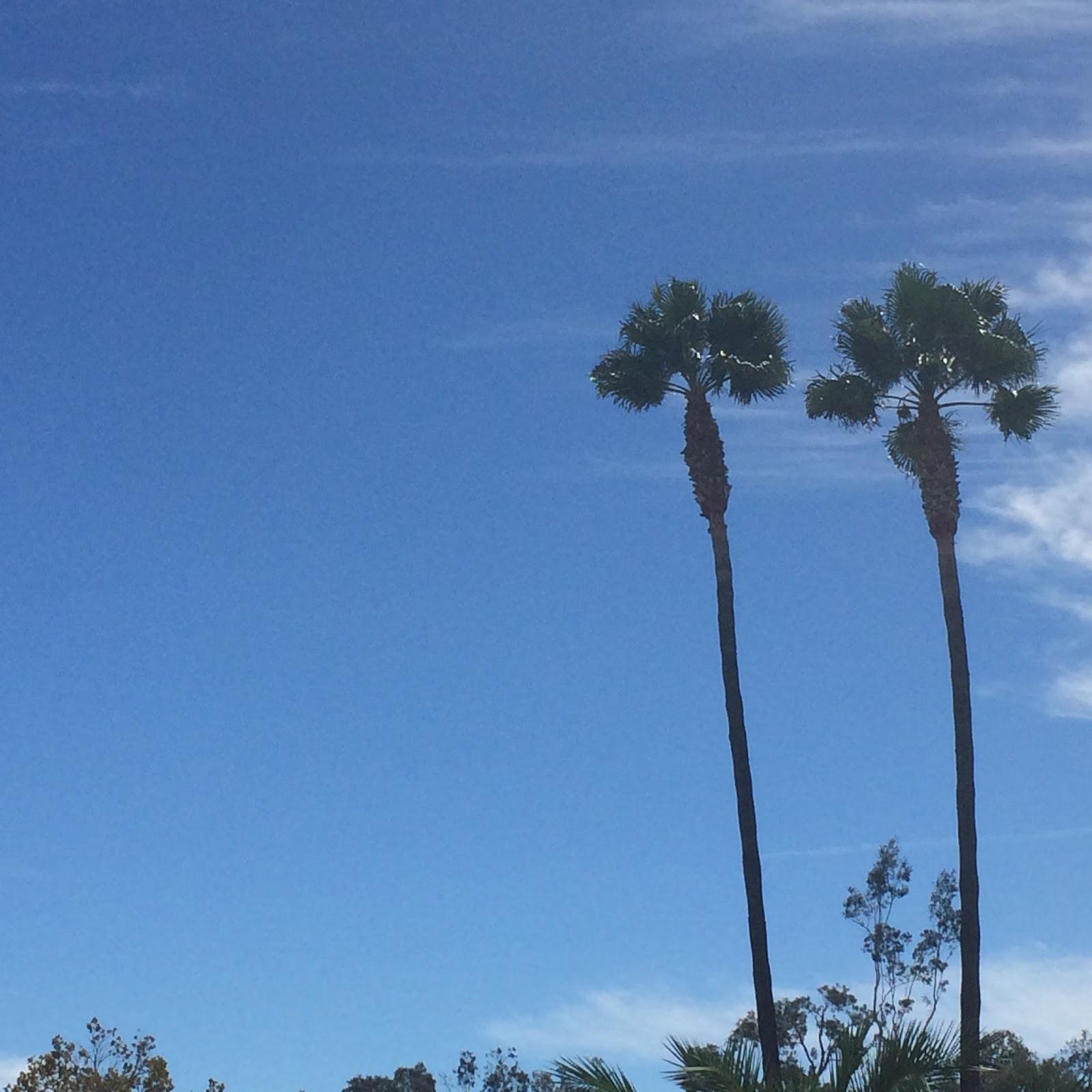 Palm Springs Guide | FASHinNY