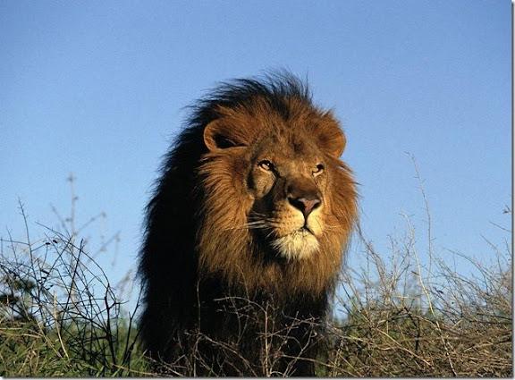 Животные африки мастер классы по