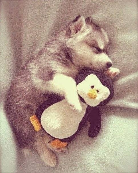 sleeping animal pictures
